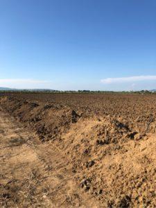 terreno ulivi iamboo